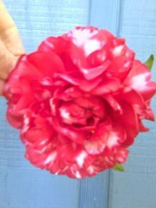 Bobby Fain camellia  2-24-13-moto_0297