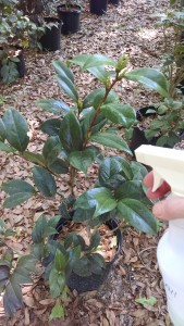 spraying-all-season-oil-img_2015032953718